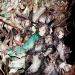 最強RPG「ブレイブリーデフォルト フェアリーズエフェクト」がスマホ無料ゲームアプリにやってくる